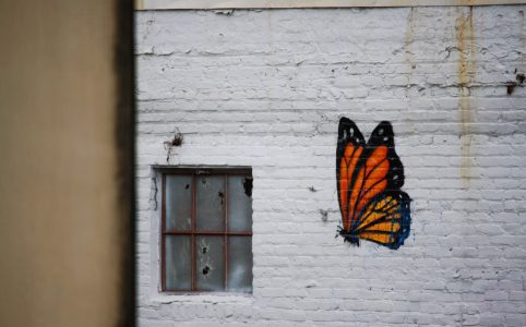 graffiti drawing of butterfly
